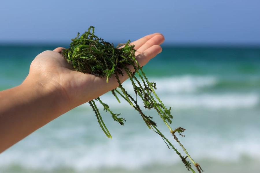 Bellezza: le virtù delle alghe marine