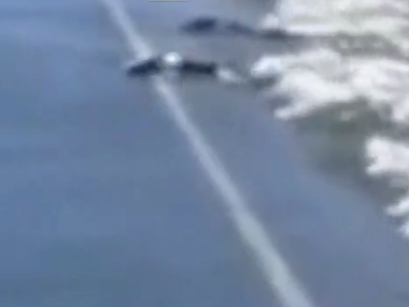 I salmoni attraversano la strada, accade a Washington