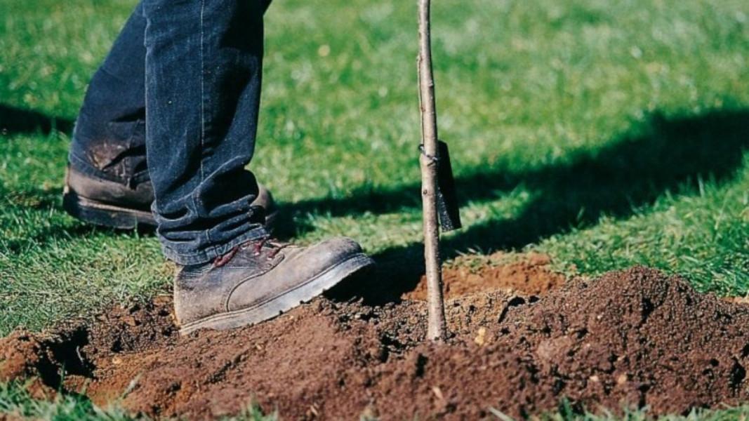 Festa degli alberi: Laviano, piantati duecento esemplari