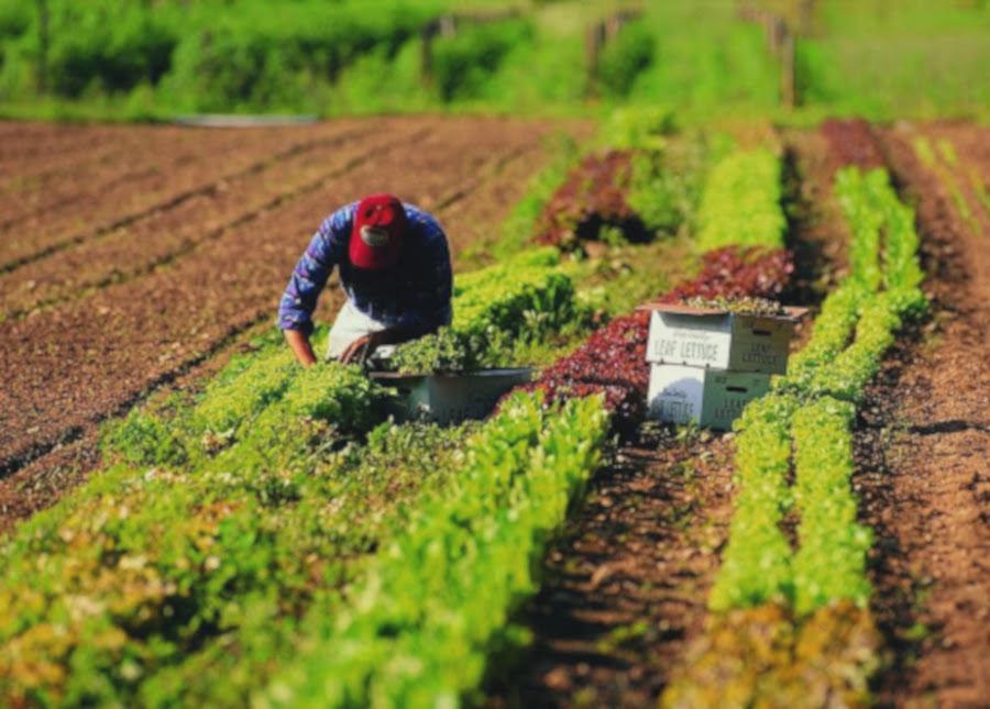 Cercasi agronomi nella piana del Sele, appello delle aziende