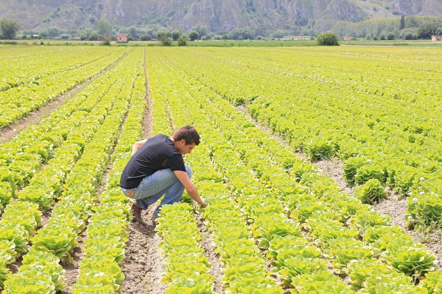 Nuove tecnologie in campo: premiata l'azienda agricola Rago
