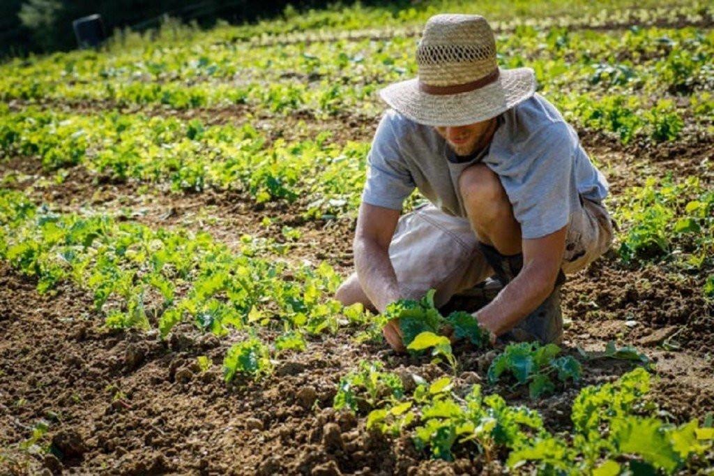 """Ismea al fianco dei giovani agricoltori con """"Più Impresa"""""""
