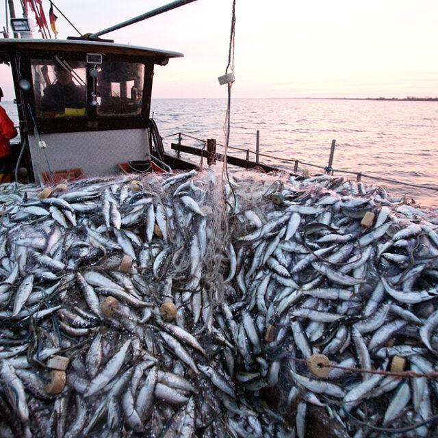 BMTA 2021: Cetara e Ghazaouet, sulle rotte di antichi pescatori